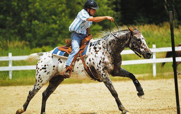Особенности лошадей породы аппалуза