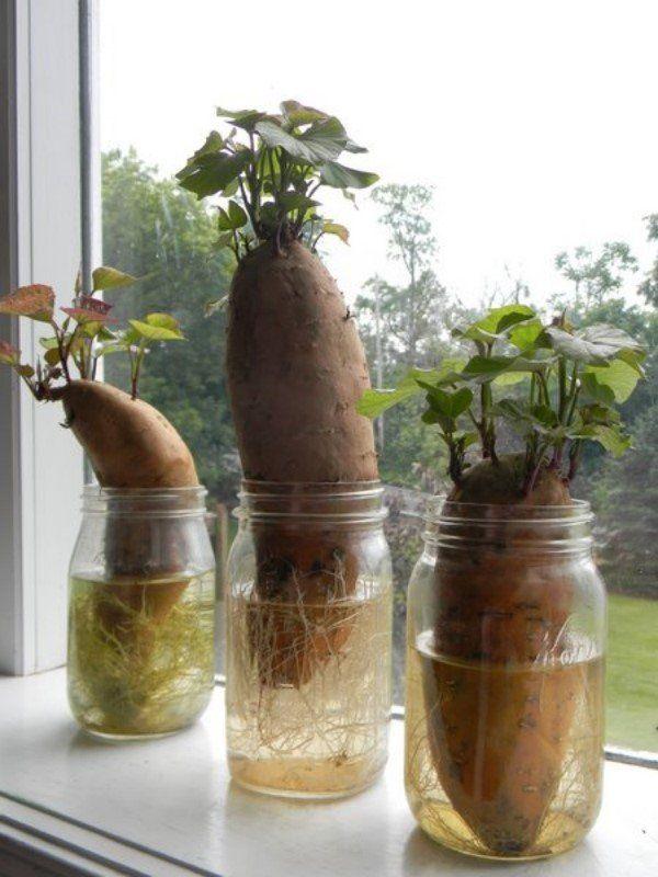Что такое батат сладкий картофель и с чем его едят 2