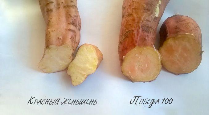 Что такое батат сладкий картофель и с чем его едят 7