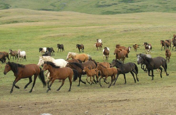 Масти лошадейназвания и фото