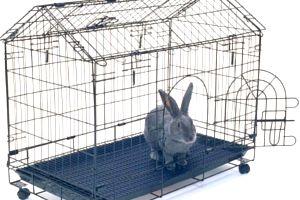 Декоративные кролики, уход и кормление как залог здоровья 1