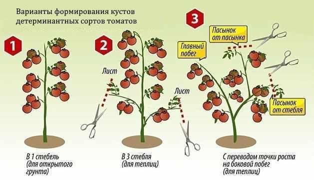 Лучшие индетерминантные сорта помидор 4