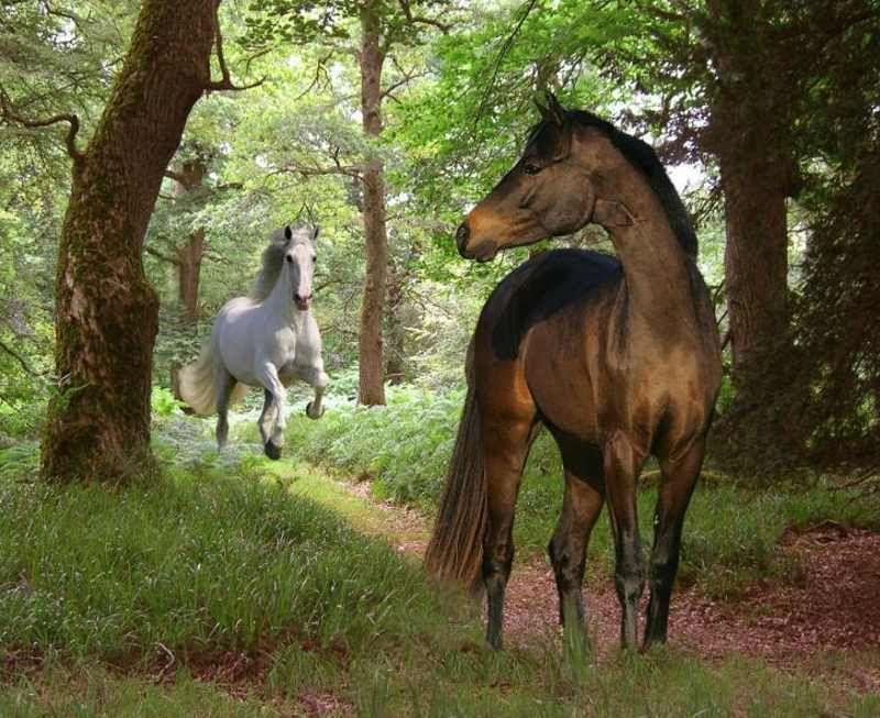 Мустанг лошадь фото великолепие, рожденное в прериях