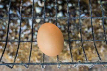 Срок годности яиц сырых, вареных, пасхальных, очищенных при хранении в холодильнике, подвале, морозилке 2