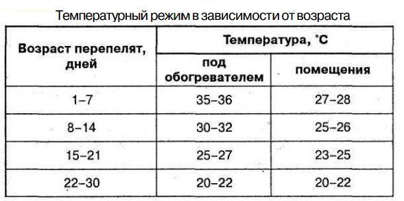 Инкубация перепелиных яиц режим, температура, таблица 1