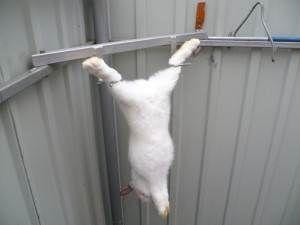 Как правильно забить и разделать кролика в домашних условиях 5