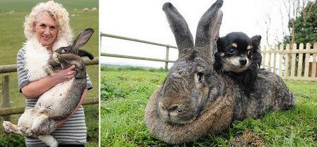 Выращивание кроликов в домашних условиях 4