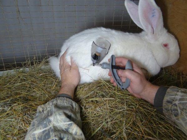 Выращивание кроликов в домашних условиях 10