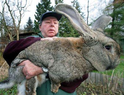 Выращивание кроликов в домашних условиях 5