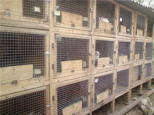 Выращивание кроликов в домашних условиях 2