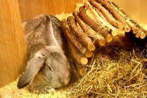 Выращивание кроликов в домашних условиях 6