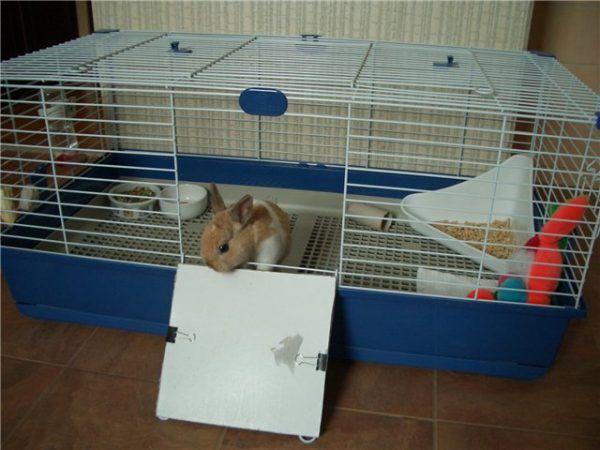 Выращивание кроликов в домашних условиях 7