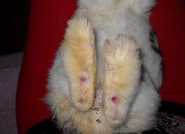 Выращивание кроликов в домашних условиях 8