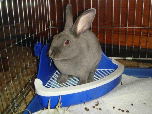 Выращивание кроликов в домашних условиях 9