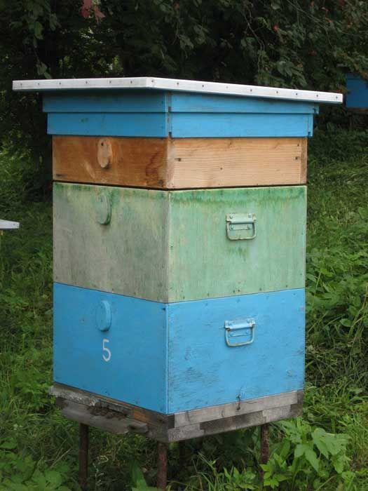 Как правильно подготовить пчел к зимовке правила и полезные рекомендации 1