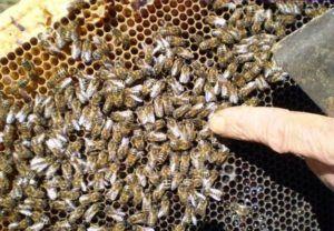 Как правильно подготовить пчел к зимовке правила и полезные рекомендации 2
