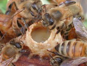 Как правильно подготовить пчел к зимовке правила и полезные рекомендации 5