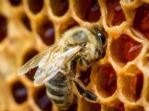 Как правильно подготовить пчел к зимовке правила и полезные рекомендации 6