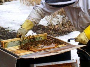 Как правильно подготовить пчел к зимовке правила и полезные рекомендации 7