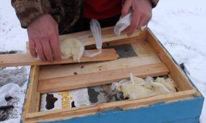 Как правильно подготовить пчел к зимовке правила и полезные рекомендации 8