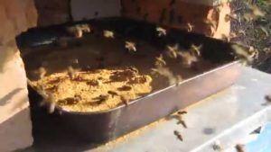 Как правильно подготовить пчел к зимовке правила и полезные рекомендации 9