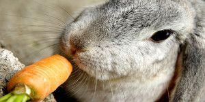 Корм для кроликов 10