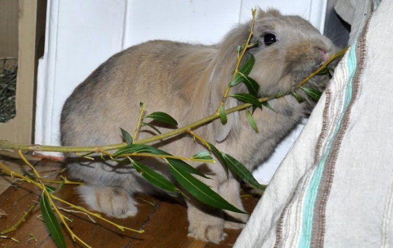Корм для кроликов 7
