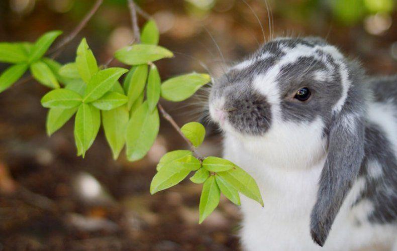 Корм для кроликов 8