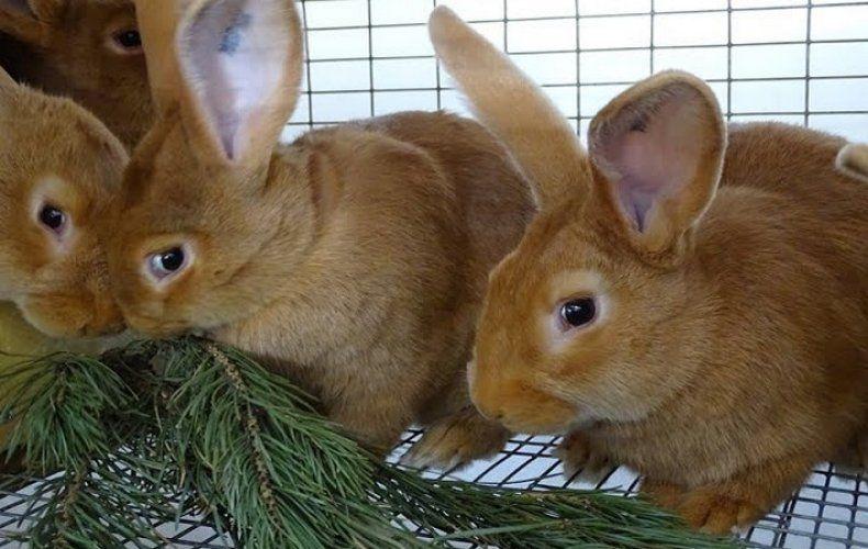 Корм для кроликов 9
