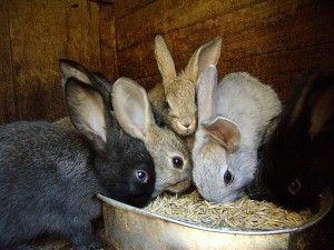 Комбикорм для домашних кроликов 7