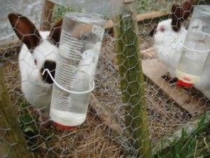 Комбикорм для домашних кроликов 18