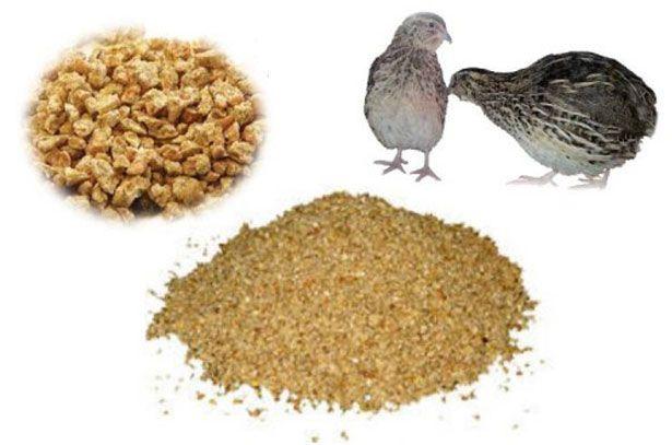 Кормление перепелок несушек в домашних условиях виды кормов, полезные и вредные продукты 10