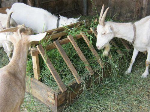 Как правильно сделать кормушку для козы 23