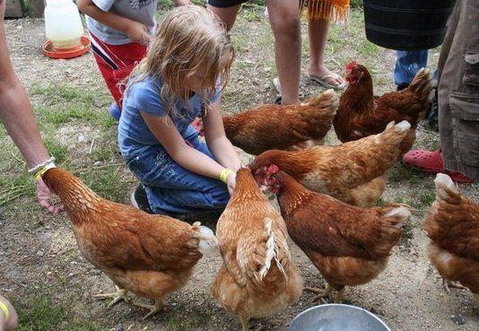 Чем кормить кур несушек в домашних условиях 24