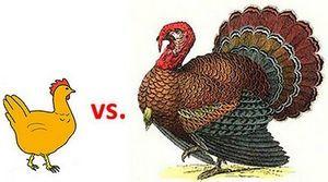 Волшебное мясо индейки польза и вред испанской курицы 6