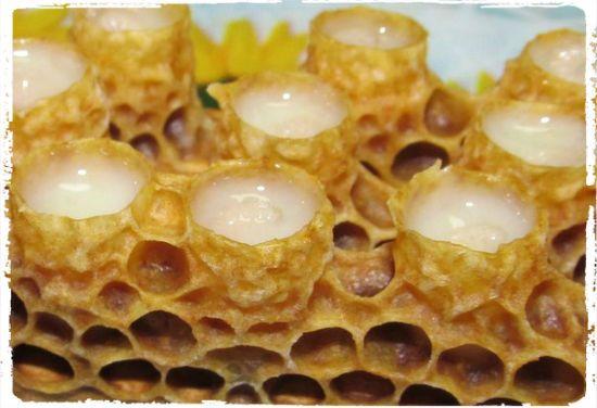 Мед с маточным молочком 1