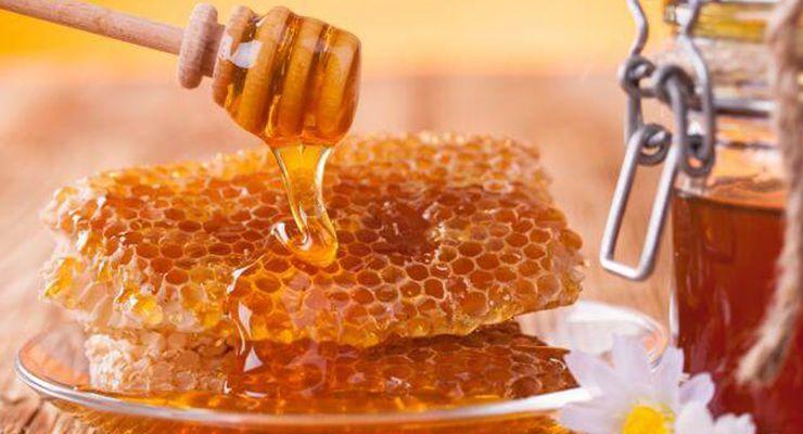 Как пчелы строят соты и делают мед 11