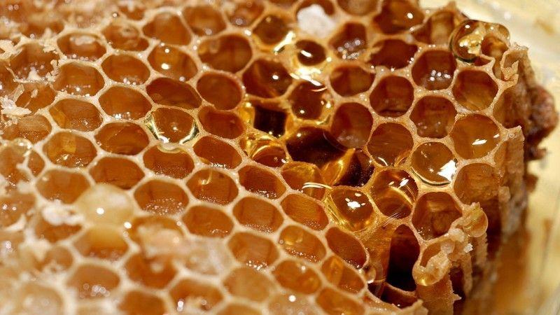 Как пчелы строят соты и делают мед 12