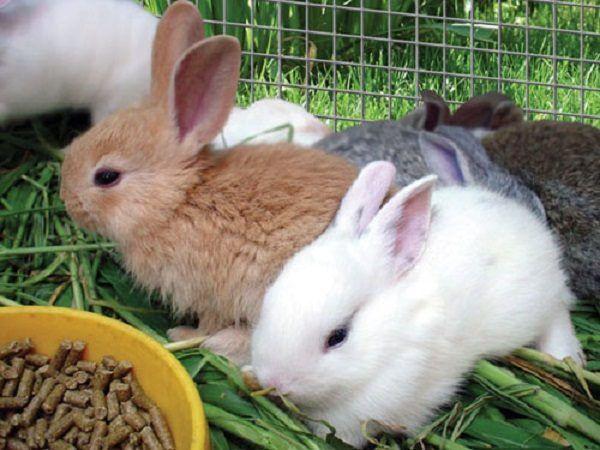 Тыква кроликам можно лиТыква кроликам можно ли 3