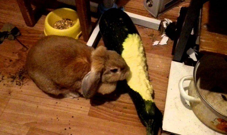Тыква кроликам можно лиТыква кроликам можно ли 4