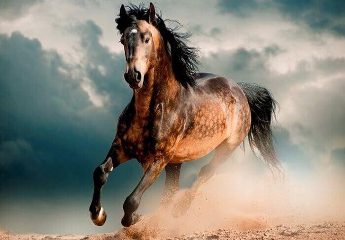 Лошадь мустанг