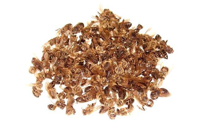 Полезные свойства, применение пчелиного подмора настойка на водке для суставов, масло для компрессов, средство для ванночек 8