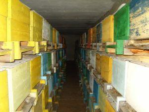Как организовать зимовку пчёл 1