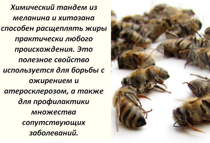 Что лечит пчелиный подмор 6