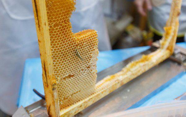 Пчела 6