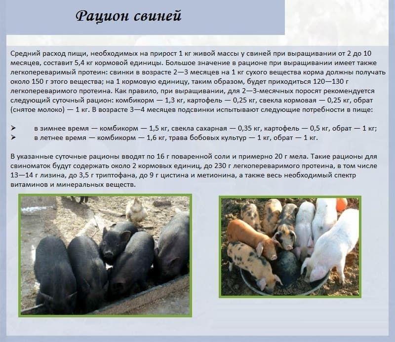Сад и огородописание и приготовление кормов, применяемых в домашнем свиноводстве 5