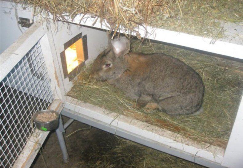 Как построить клетку для декоративного кролика своими руками