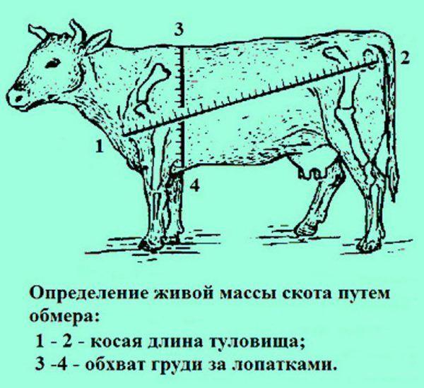 Cколько сена нужно заготовить корове на зиму