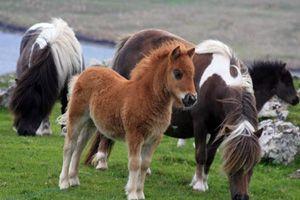 Продолжительность жизни лошадей 6