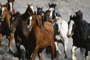 Продолжительность жизни лошадей 7